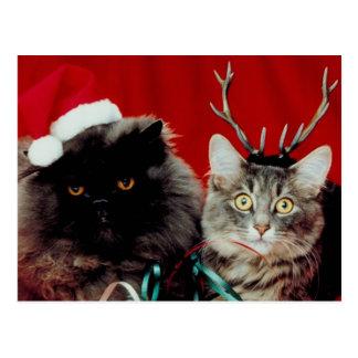 Christmas Cats Postcard
