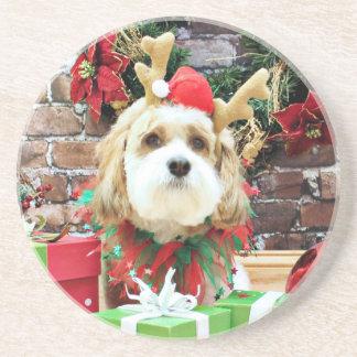 Christmas - Cavachon - Max Coaster