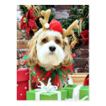 Christmas - Cavachon - Max Postcard
