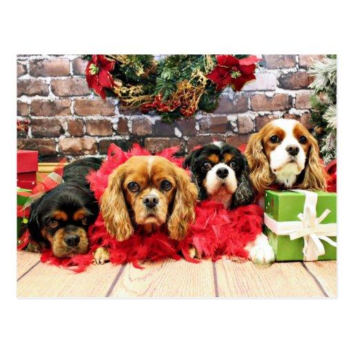Christmas - Cavalier - Sweet Pea, Lily, Rose Poppy Postcard