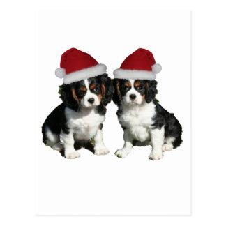 Christmas Cavaliers Postcard