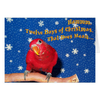 Christmas Chew Toys Greeting Card