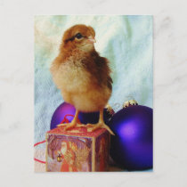 Christmas Chick 2 Holiday Postcard