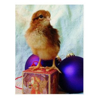 Christmas Chick 2 Postcard