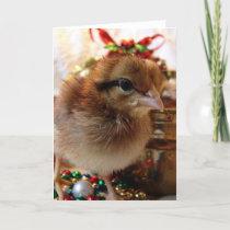Christmas Chick 3 Holiday Card