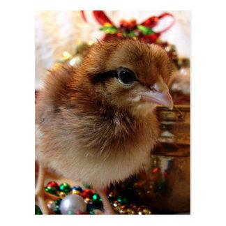 Christmas Chick 3 Postcard
