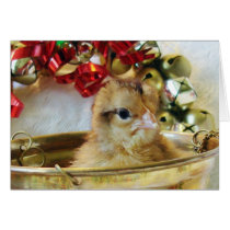 Christmas Chick Card