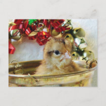 Christmas Chick Holiday Postcard