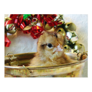 Christmas Chick Postcard