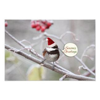 Christmas Chickadee Photo Print