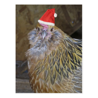 Christmas Chicken Postcard