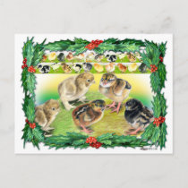 Christmas Chicks Holiday Postcard