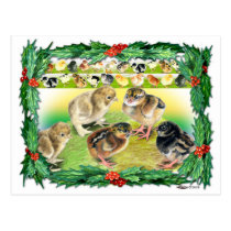 Christmas Chicks Postcard