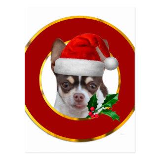 Christmas Chihuahua dog Postcard