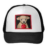 Christmas Chihuahua hat