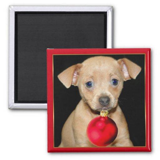 Christmas Chihuahua magnet