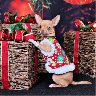 Christmas - Chihuahua - Matty Photo Cut Out
