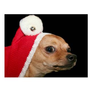Christmas Chihuahua postcard