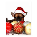 Christmas chihuahua puppy post cards