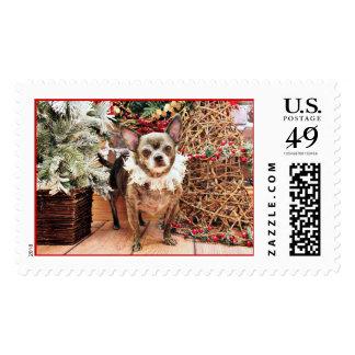 Christmas - Chihuahua - Smokey Stamp