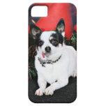 Christmas - Chihuahua X - Stella iPhone 5 Case