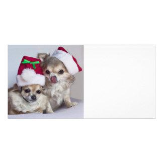 Christmas chihuahuas photo card