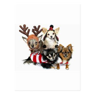 Christmas Chihuahuas Postcard