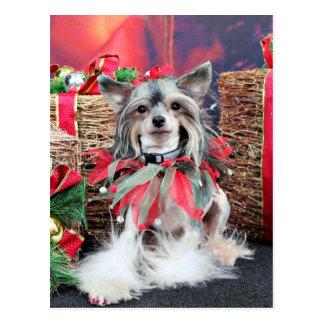 Christmas - Chinese Crested - Sheeba Postcard