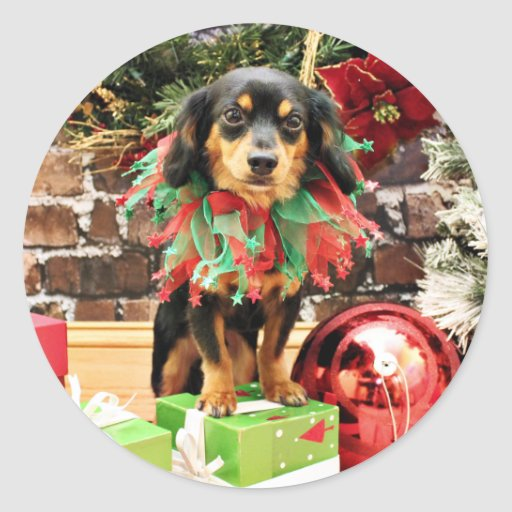 Christmas - Chiweenie - Titus Classic Round Sticker