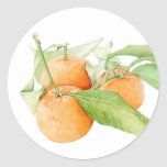 Christmas Clementines Sticker