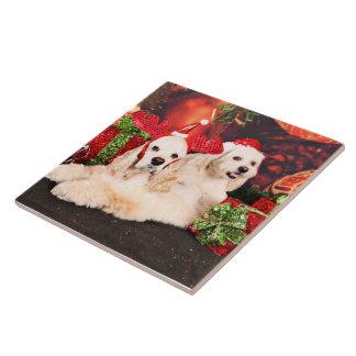 Christmas - Cocker - Toby, Havanese - Little T Tile