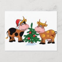 Christmas Cows Holiday Postcard