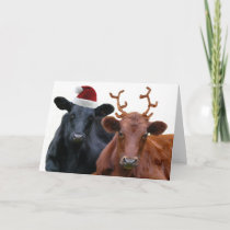 Christmas Cows in Santa Hat and Antlers Holiday Card