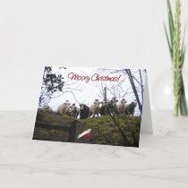 Christmas cows wearing Santa hats. Holiday Card