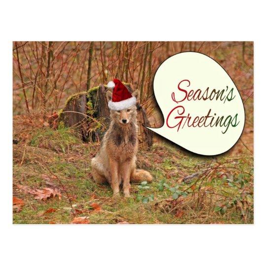 Christmas Coyote Postcard