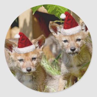 Christmas Coyote Pups Classic Round Sticker