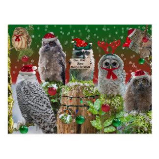 Christmas Critters Owls and Raccoon Postcard