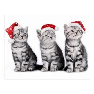 Christmas Cute Kitten Postcard