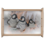 Christmas dancing penguins serving tray