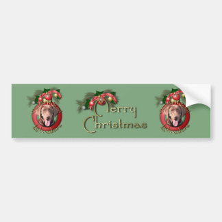 Christmas - Deck the Halls - Labradors - Chocolate Bumper Sticker