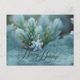 Christmas Dew on the Pine Holiday Postcard