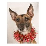 Christmas Dog 1 Postcard