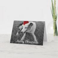 Christmas Dog with Santa Hat Greeting Card