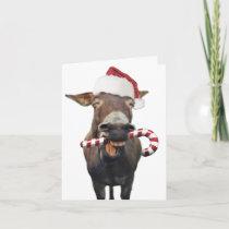Christmas donkey - santa donkey - donkey santa holiday card