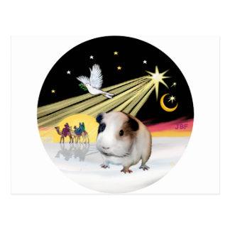 Christmas Dove - Guinea Pig 1 Postcard
