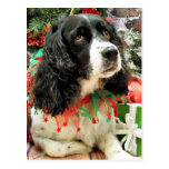 Christmas - English Springer Spaniel - Lucy Postcards