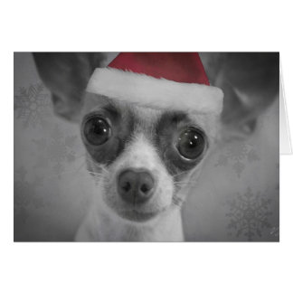 Christmas Funny Chihuahua Puppy with Santa Hat Card