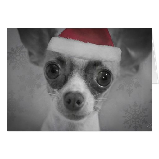 Christmas Funny Chihuahua Puppy with Santa Hat Greeting Card