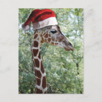 Christmas Giraffe Holiday Postcard