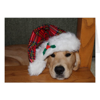 Christmas Golden Puppy in Hat Greeting Card